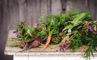 Conservarea alimentelor – verdeturile de primavara